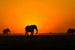 WSO: Elephant landscape witnessing dramatic change in Odisha
